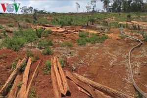 Nông nghiệp Tây Nguyên tiểm ẩn nguy cơ phát triển không bền vững