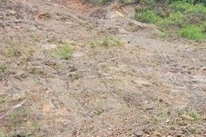Nghệ An: Xuất hiện vết nứt dài trăm mét đe dọa tính mạng người dân