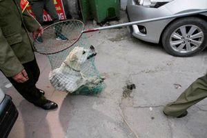 Hà Nội: Hàng nghìn người bị chó cắn, phải tiêm phòng dại