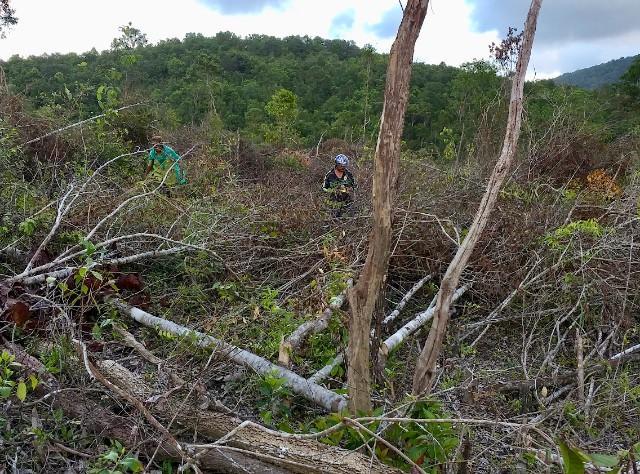 Điều tra vụ 'cạo trọc' 30 nghìn m2 rừng sản xuất