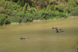 Kon Tum: Truy bắt đoàn gỗ lậu ngang nhiên vượt sông giữa ban ngày