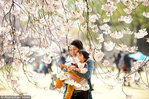 5 quy tắc nuôi dạy con của cha mẹ Nhật mà mọi phụ huynh nên học hỏi