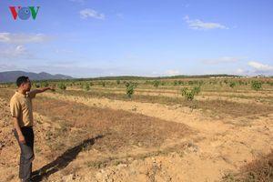 Xé rào chuyển đổi đất rừng: Doanh nghiệp ở Gia Lai 'tiền trảm hậu tấu'