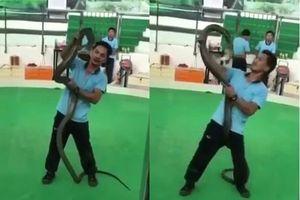 Nghệ sĩ biểu diễn rắn bất ngờ bị hổ mang tung cú cắn chết người