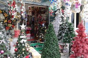 Cây thông Noel tự nhiên đắt hàng