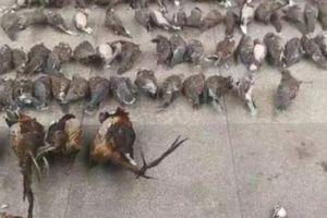 Đầu độc và đông lạnh hơn 400 con chim, người phụ nữ TQ 'gặp hạn'