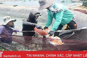Hà Tĩnh chuyển 75 ha nuôi tôm quảng canh sang công nghệ cao