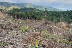 Khởi tố điều tra vụ phá 30.000 m2 rừng để... 'trồng rừng' tại Krông Pa, Gia Lai
