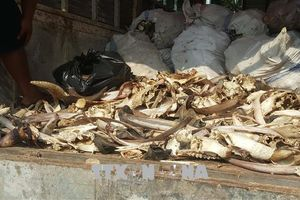 Tiêu hủy 6,5 tấn xương động vật không rõ nguồn gốc, bốc mùi hôi thối