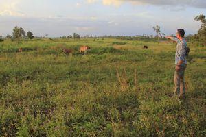 Gia Lai: Ban Quản lý rừng 'ém' hơn 400 ha rừng bị mất?