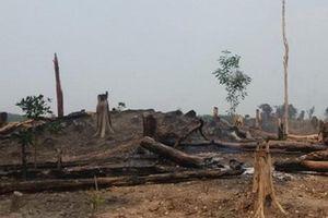 Vụ làm mất hơn 550 ha rừng: Chuyển hồ sơ sang Cơ quan cảnh sát điều tra