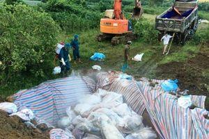 Thanh Hóa: Tiêu hủy 240 con lợn nghi bị nhiễm bệnh lở mồm, long móng
