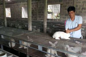 9x khởi nghiệp từ nuôi thỏ Newzealand