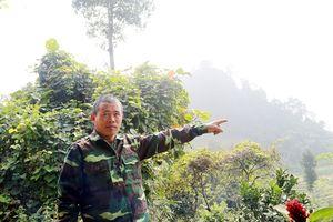 Chuyện về rừng cấm nghìn tuổi và 'hùm xám' đại ngàn Cốc Ly