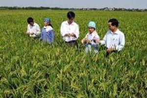 Kiện toàn Ban Chỉ đạo Trung ương về đào tạo nghề cho lao động nông thôn