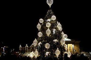 Thị trường cây thông Noel tự nhiên hút khách