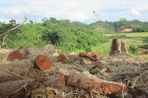 Khởi tố vụ án hình sự vụ phá 3 ha rừng