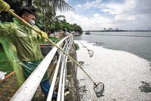 Tranh cãi phương án giải cứu Hồ Tây, hồi sinh sông Tô Lịch