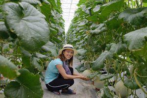 Cô gái và vườn dưa lưới