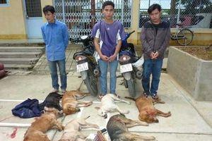 Hà Nội dự định gắn chip cho gần 500 nghìn con chó