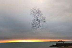 CLIP HOT (23/12): Rắn 'xử tử' chồn, 'trái tim khổng lồ' bất ngờ xuất hiện giữa bầu trời