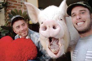 Chú lợn 'phi thường' chiến thắng ung thư này chính là thú cưng có sức ảnh hưởng nhất mạng xã hội 2018