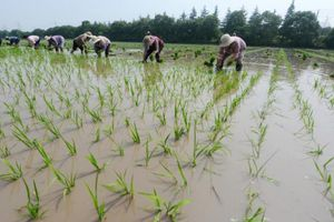 Khi trí thức Trung Quốc về quê làm nông dân…