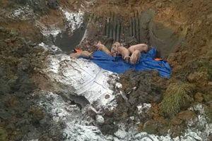Tiêu hủy hơn gần 12 tấn lợn lở mồm long móng