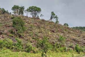 Xử lý nghiêm đối tượng phá 30.000m² rừng ở xã Chư Drăng, huyện Krông Pa