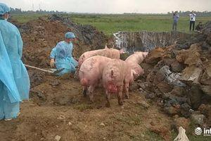 Hà Tĩnh: Bắt giữ xe tải chở gần 100 con lợn bị lở mồm long móng
