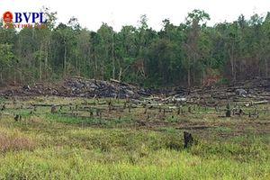 Kiến nghị chuyển hồ sơ vụ mất 550ha rừng sang Cơ quan điều tra