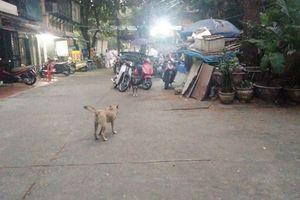 Hà Nội: Mạnh tay dẹp chó thả rông