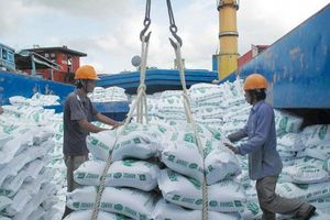 Xuất khẩu gạo 1 năm 'được mùa'