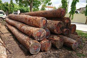 Vụ trùm gỗ lậu Phượng 'râu': Bị khởi tố một giám đốc bỏ trốn