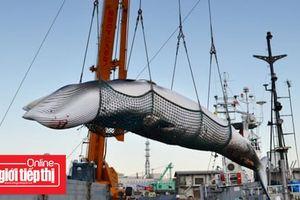 Rút khỏi IWC, Nhật Bản tiếp tục đánh bắt cá voi vào tháng 7/2019