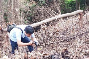 Tiếng kêu cứu từ những cánh rừng Quảng Trị: 'Phải xử lý nghiêm cho dù người vi phạm là ai'