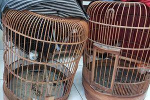 'Hiệp sĩ' Sài Gòn truy đuổi 2 tên trộm chim ở chung cư như phim hành động
