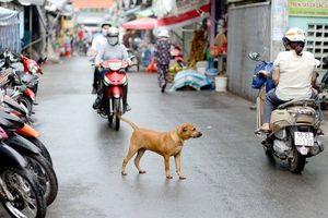 Hà Nội: Đề xuất quản lý chó nuôi bằng phần mềm, gắn chip định vị là ý tưởng viển vông!