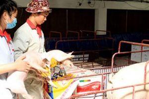 Ngành chăn nuôi: Đừng vui mừng sớm với 'vòng nguyệt quế'