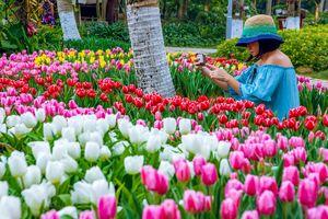 Trầm trồ trước vườn hoa Tulip siêu đẹp ở lễ hội 'Sắc màu Hà Lan'