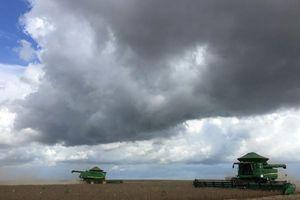 Hạn hán gây ảnh hưởng nặng nề đến sản lượng đậu nành ở bang chủ chốt của Brazil