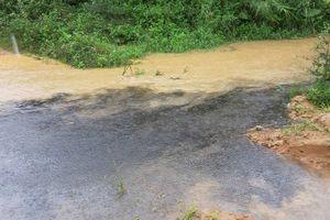Quảng Bình: Trại bò Hòa Phát vi phạm nghiêm trọng nhưng chỉ bị xử phạt 25 triệu đồng