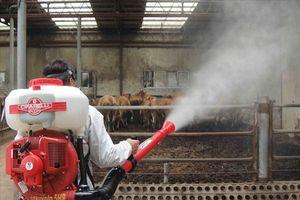 95 ổ dịch tại Trung Quốc, dịch tả lợn Châu Phi ngấp nghé Việt Nam