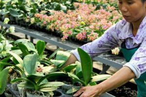 Hà Nội: Nông dân có thu nhập hấp dẫn, bình quân 46 triệu/người/năm