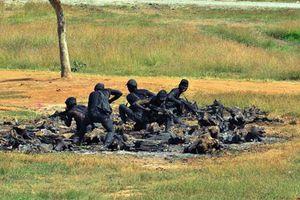 Đặc công Việt Nam 'xuất quỷ nhập thần' luồn sâu, đánh hiểm