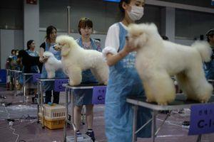 Hàn Quốc 'quay lưng' với thương mại thịt chó như thế nào?