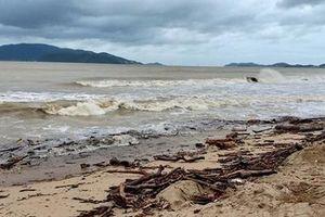 Bờ biển Nha Trang ngập rác sau mưa lũ, du khách văng teo