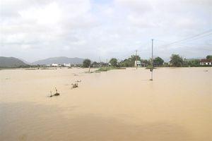 Bình Định: Mưa to, nhiều diện tích lúa ĐX đang chìm trong lũ