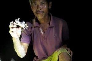Ly kỳ chuyện đêm tối đi săn loài 'nhát chết', nướng thơm lừng ở đảo Bé