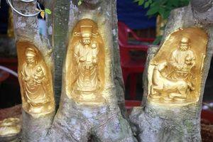 Quan Âm Bồ Tát cưỡi rồng vàng hiện hình trên cây khế
